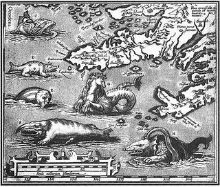 Shark diving - O Mergulho Com Tubarōes (2/6)