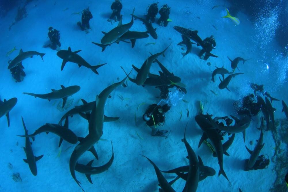 Shark diving - O Mergulho Com Tubarōes (4/6)