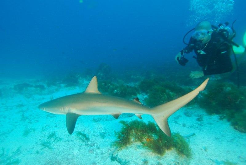 Shark diving - O Mergulho Com Tubarōes (1/6)