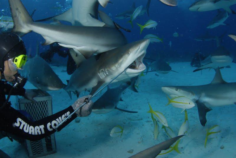 Shark diving - O Mergulho Com Tubarōes (6/6)