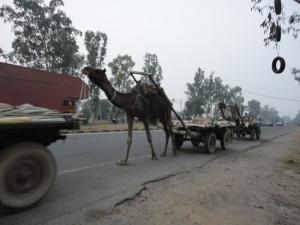 06-India-00010