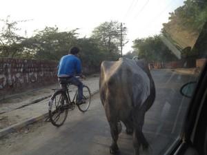 06-India-00014